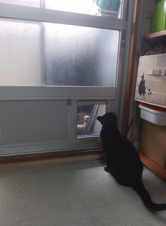 ペットドア猫ちゃん