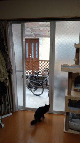 猫が外を見られる窓ガラス交換後