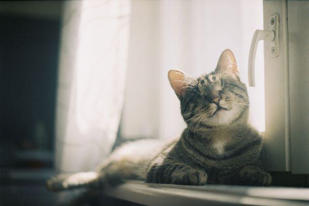 ペットが喜ぶ窓辺